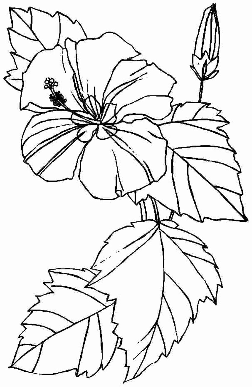 Free Coloring Papers Printable Of Free Printable Hibiscus Coloring Pages for Kids