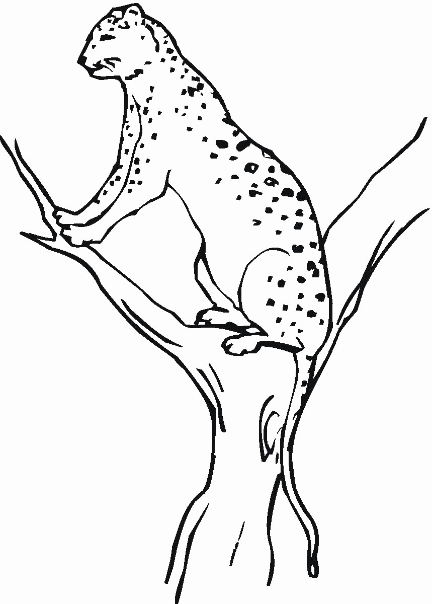 Printable Learning Pages for toddlers Coloring Downloadable then Free Printable Cheetah Coloring Pages for Kids