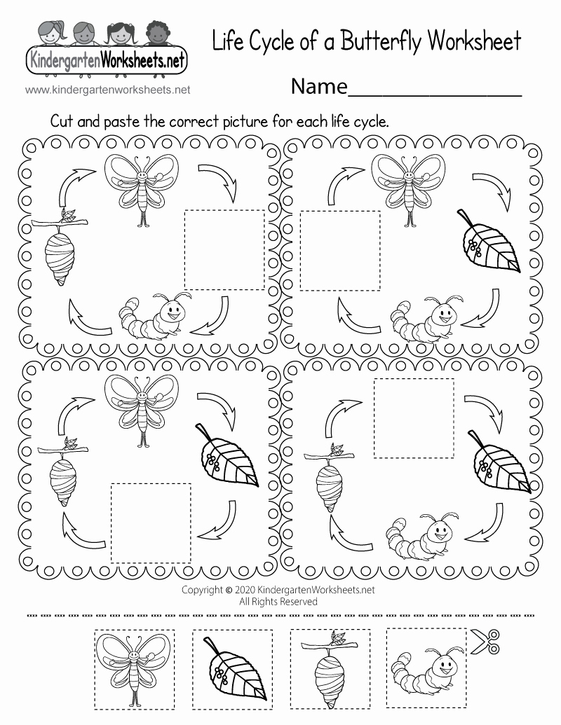 Printable Worksheets Life or Life Cycle Of A butterfly Worksheet Free Printable Digital & Pdf